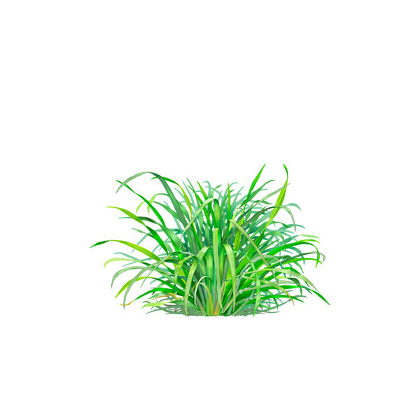lemon-grass.jpg